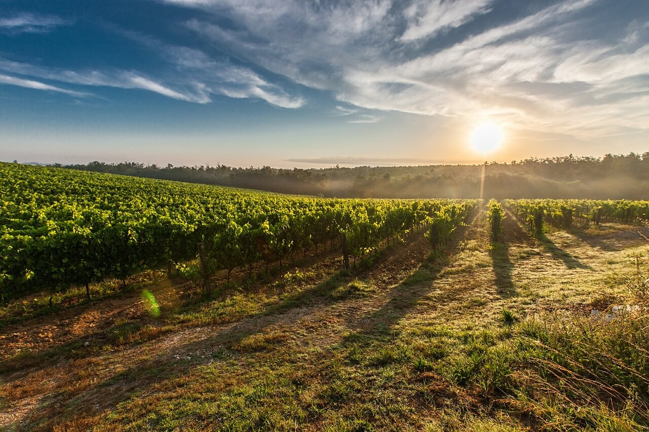 Chodníčkami vínnych ciest na Slovensku. Aké poklady ukrývajú?