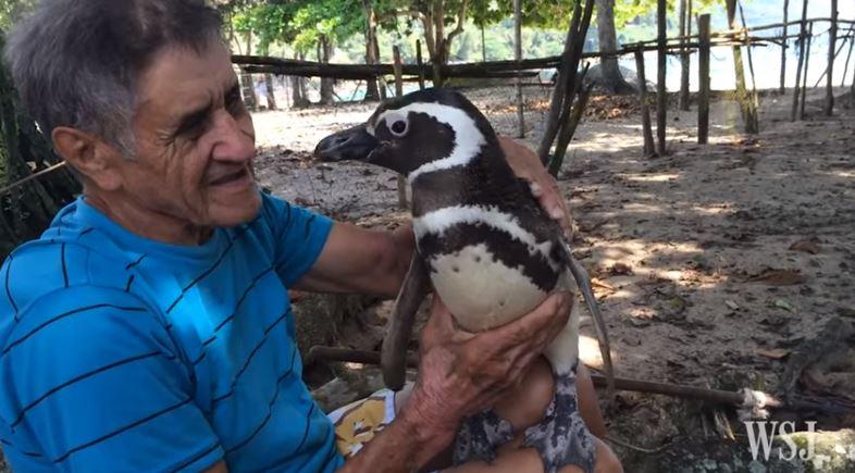 Muž zachránil tučniakovi život. Ten ho za to už štyri roky pravidelne navštevuje!