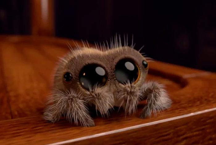 Zoznámte sa s Lucasom, najroztomilejším pavúkom, ktorý vylieči vašu arachnofóbiu