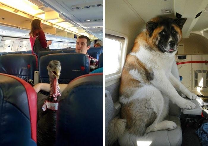 Mojich desať najlepších zvieracích spolucestujúcich v lietadle