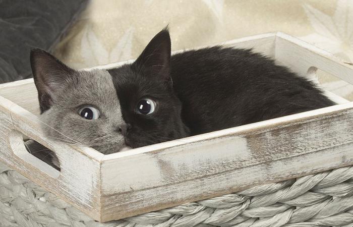 Mačiatko sa narodilo s dvoma tvárami, stala sa z neho najkrajšia mačka na svete