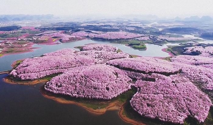 Čínu zaplavili rozkvitnuté čerešne a spravili z nej najčarovnejšie miesto na svete
