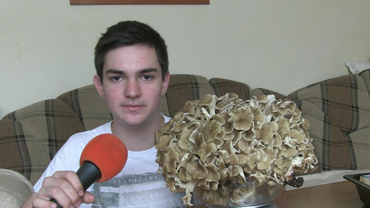Barania hlava – huba, ktorá je typická pre východ Slovenska