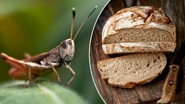 V Česku si kúpite chlieb zo svrčkov