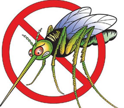 Bezproblémové leto? Sieťky proti hmyzu sú už nevyhnutnosťou