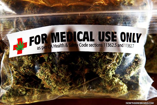 WHO búra mýty: Medicínska marihuana nepredstavuje žiadne riziko