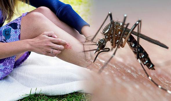 Otravuje vás hmyz? Teraz už nemusí…