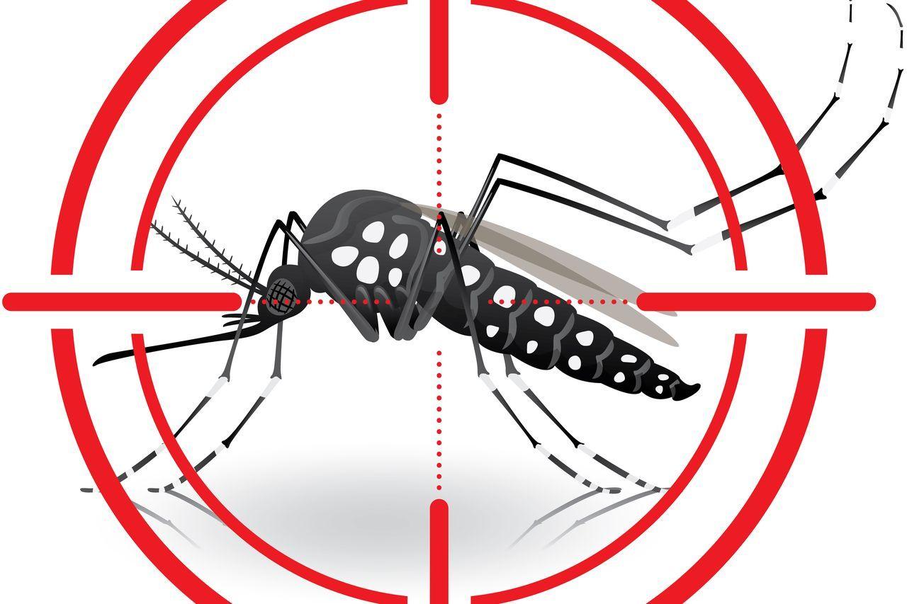 Ako dosiahnuť kľud od otravného hmyzu?