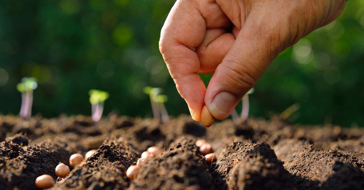 Ako kúpiť dobré semená? Postupujte podľa týchto tipov
